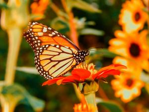 Farfalla sul prato di fiori